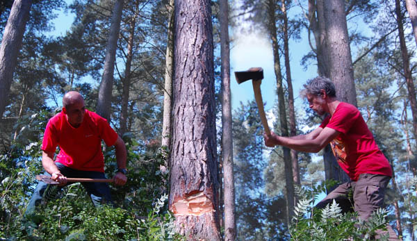 felling tree with an axe